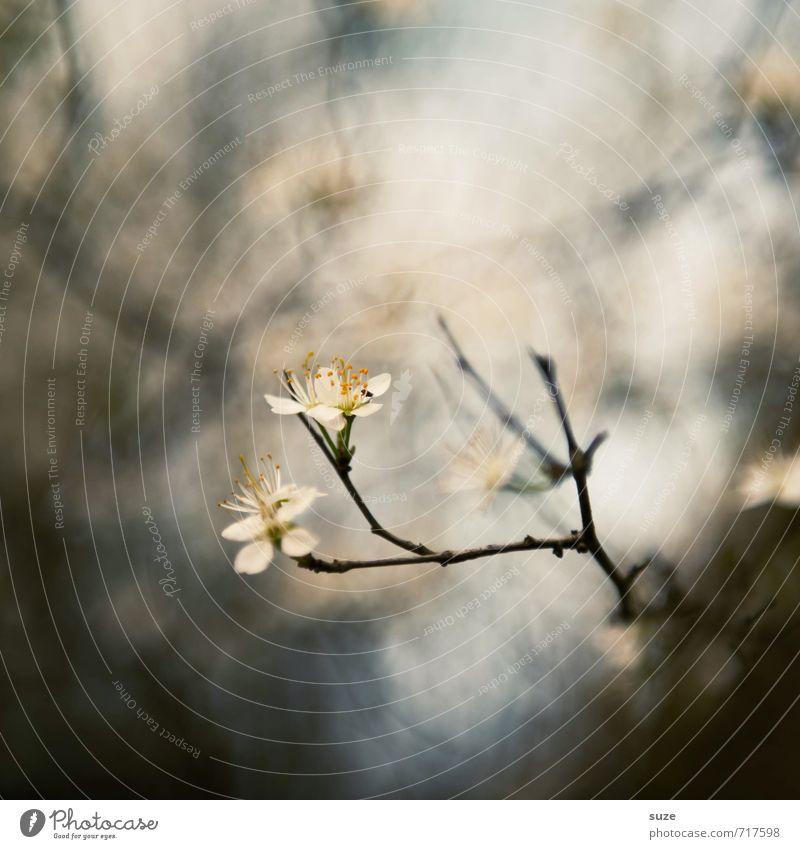 pre-sensor Lifestyle Harmonious Senses Calm Meditation Environment Nature Spring Plant Blossom Exceptional Fantastic Small Natural Beautiful Gray White Emotions