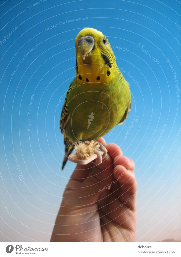 Exotic and colourful bird being hand fed. Bird Animal Zoo Air Peace Hand Pet Yellow Green Small Blue Flying Freedom Smooth