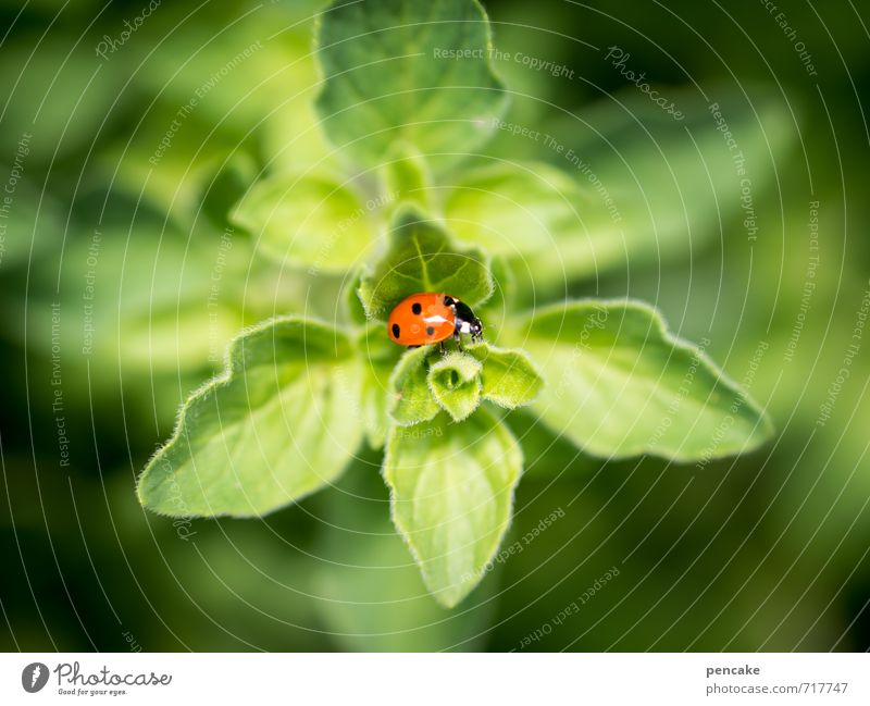 Nature Beautiful Green Plant Summer Red Leaf Animal Warmth Small Happy Success Esthetic Soft Point Sign