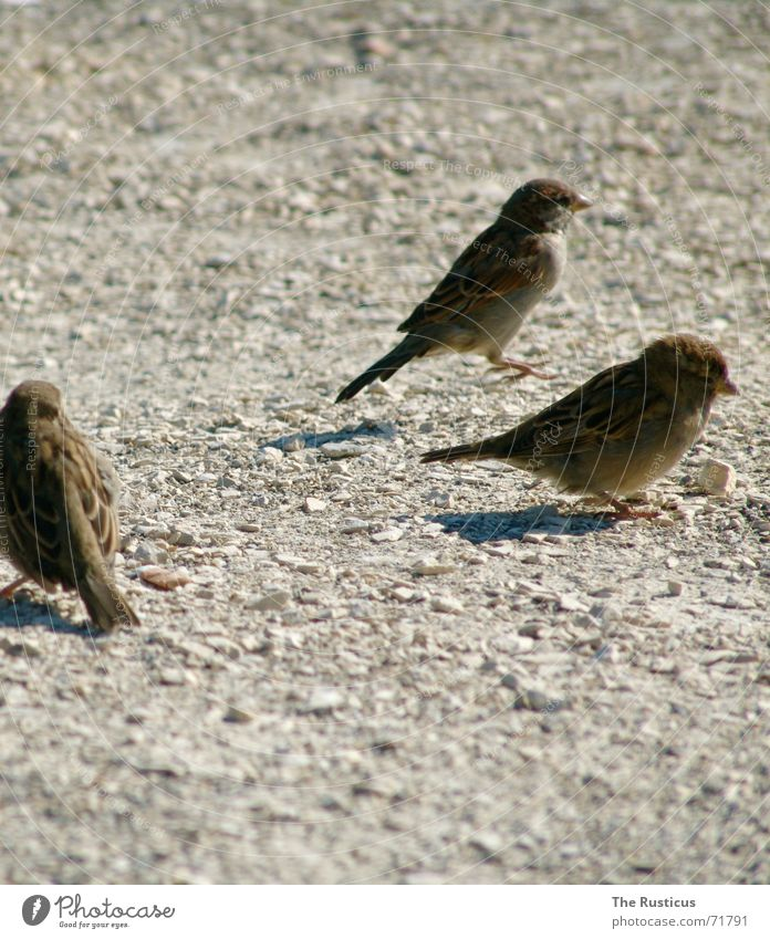 Gray Sadness Brown Bird 3 Grief Feather Cancelation Sparrow