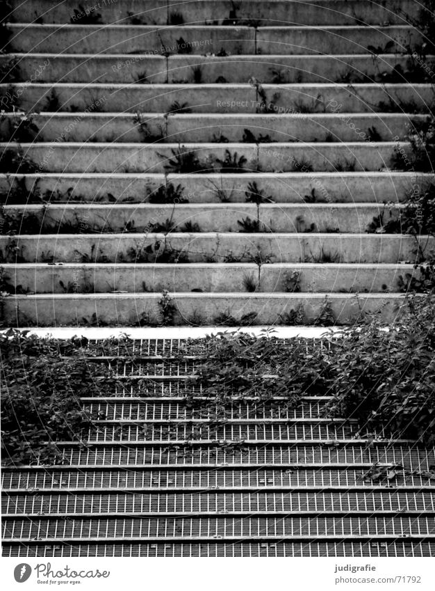 White Plant Black Gray Line Concrete Stairs Gloomy Derelict Rust Jetty Grating Parallel Overgrown