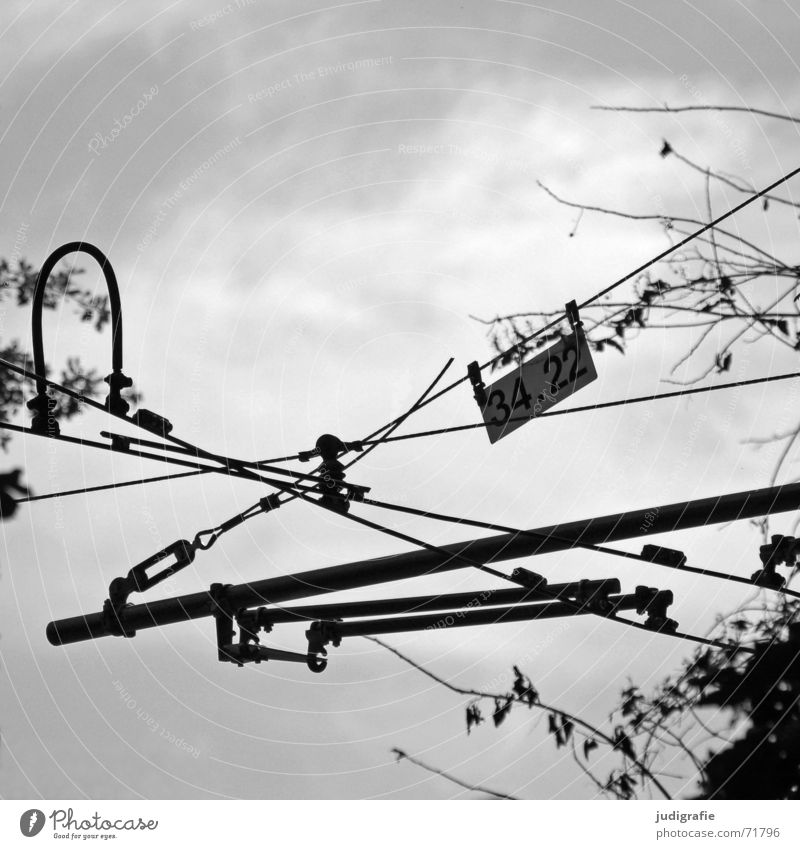 34.22 End Overhead line Rod Tram Underground Muddled Black Tree Bushes Leaf Crossed Connectedness Wire Chaos Black & white photo Transport Signs and labeling