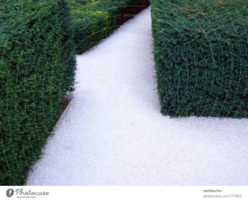 Horticulture 1 Gravel Hedge Seat of government Green Gray White Maze Aberration Exit route Way out Entrance Garden Sleeping Beauty paul lobe Interior courtyard