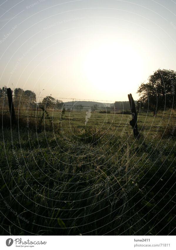 sunrise Sunrise Light Morning Dew Drops of water Back-light Fence Meadow Fog Fog bank Pasture Landscape