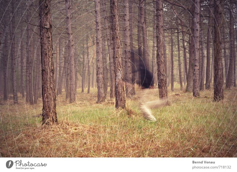 run forest !!! Human being Masculine Man Adults 1 30 - 45 years 45 - 60 years Running Escape Blur Mysterious Tree trunk Pine Grass Fog Direction Across Speed