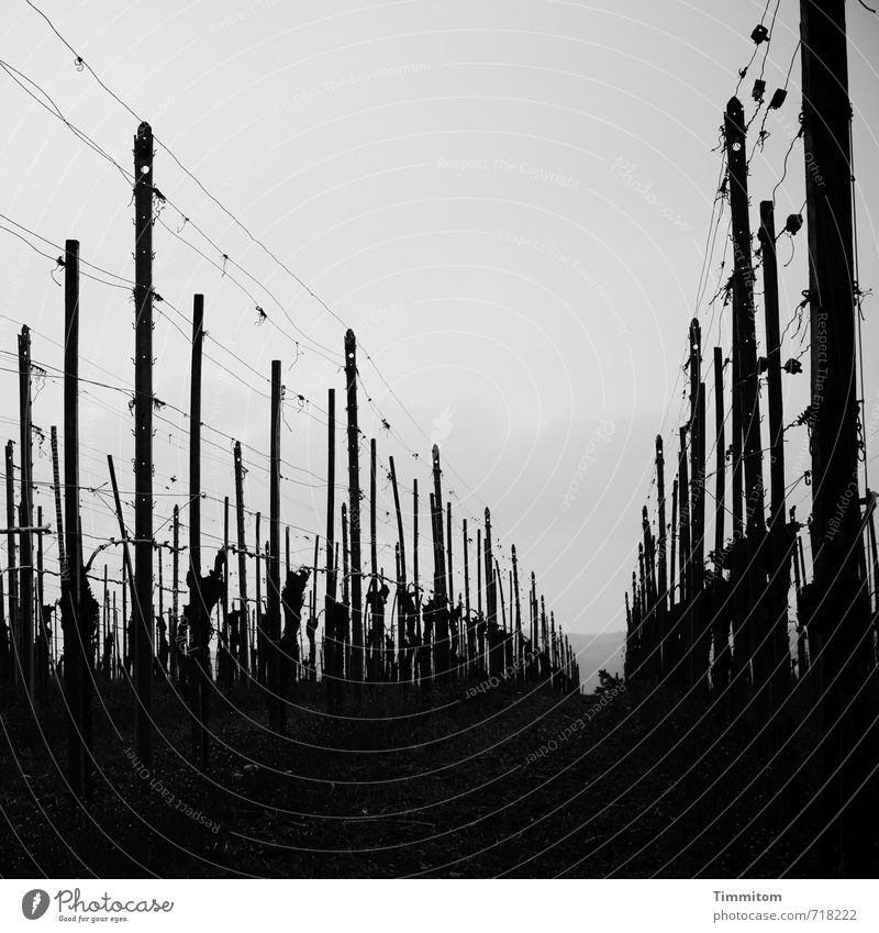 AST 7 | Ascent to Lukow Hill, II Trip Environment Nature Plant Vine Vineyard Wood Metal Growth Esthetic Dark Simple Gray Black Emotions Sowing Wire Pole