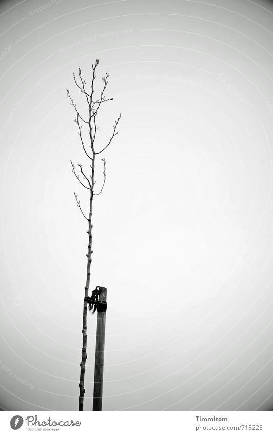 AST 7 Alone... Environment Nature Plant Sky Spring Tree Pole Fastening Wood Growth Esthetic Simple Natural Gray Emotions Loneliness Bleak buds