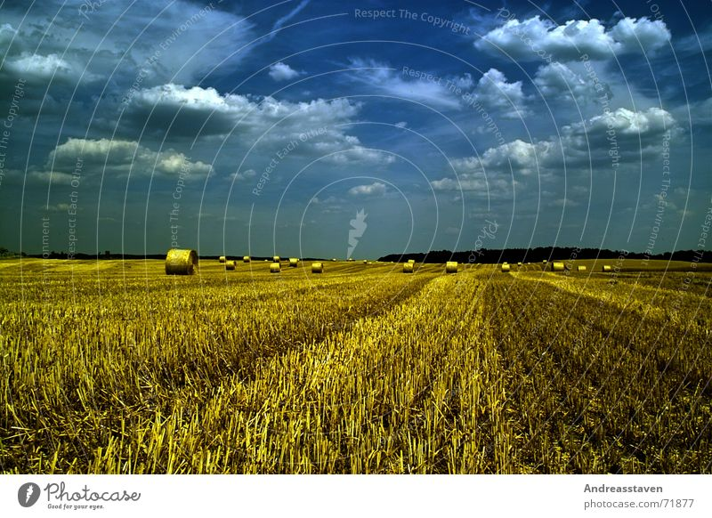 Sky Blue Summer Clouds Grass Field Background picture Lawn