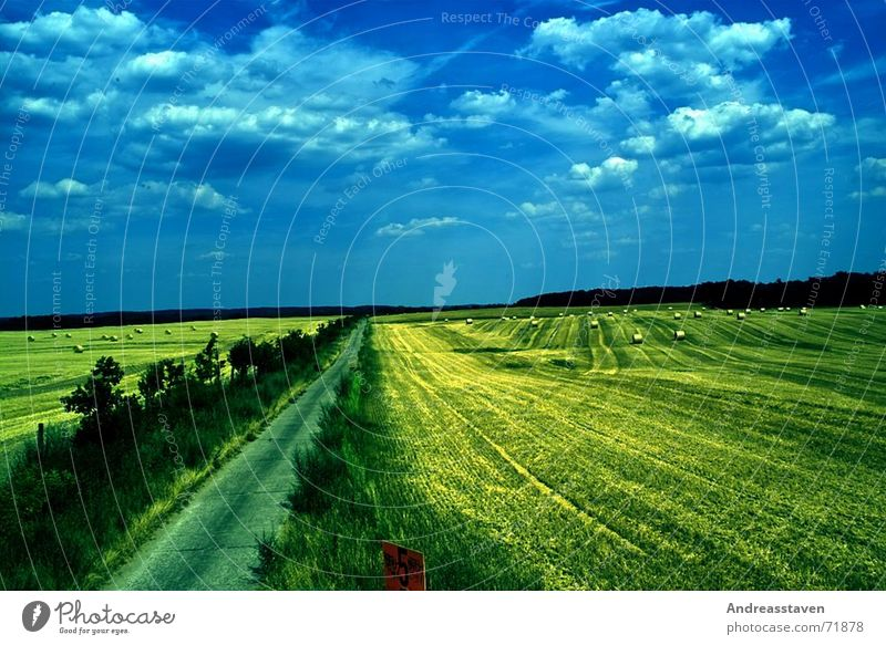 Sky Blue Tree Sun Summer Clouds Street Grass Background picture Field Signs and labeling Bushes Lawn