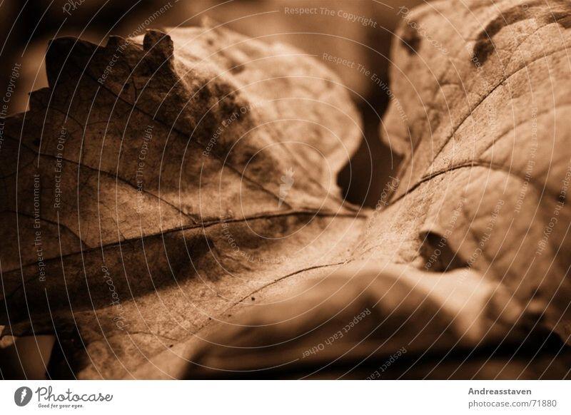 leaf Leaf Brown Tree Tree bark Romance Dream Old Prongs Nature Heart hearth