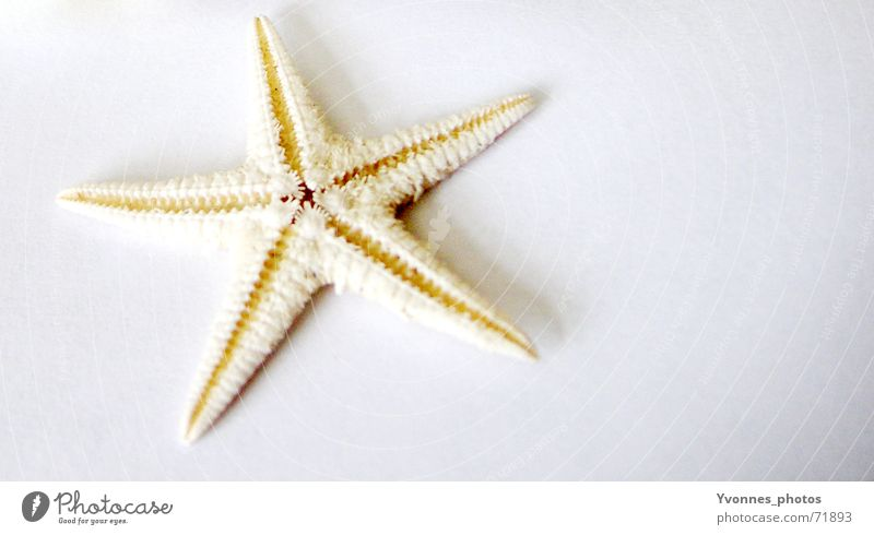 little star, I like you... Colour photo Interior shot Studio shot Copy Space right Artificial light Shadow Vacation & Travel Summer Summer vacation Beach Ocean