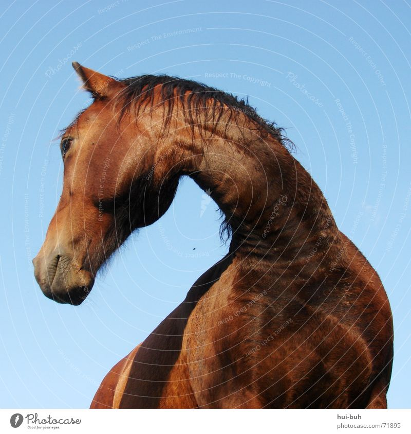 Beautiful Animal Search Large Tall Horse Under Strong Rotate Graceful
