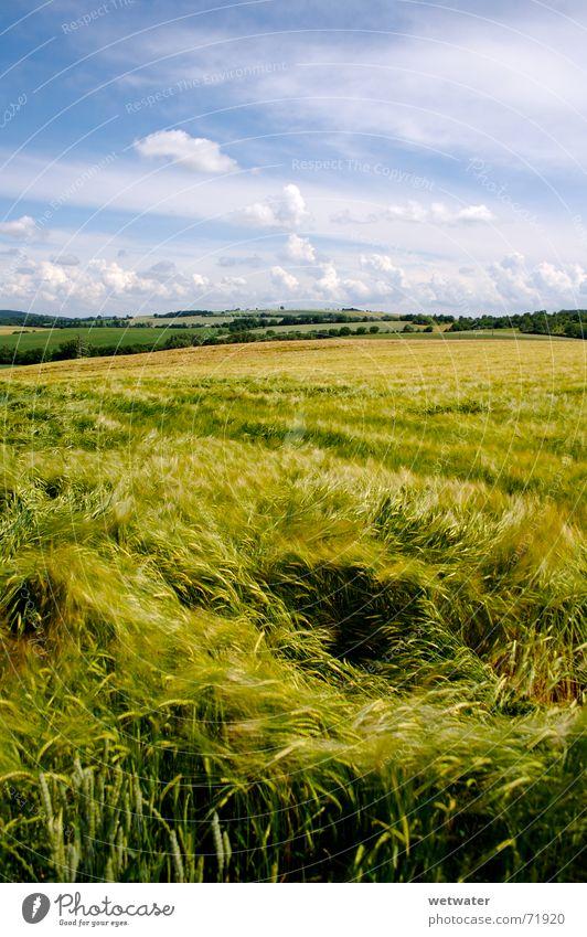Sky Green Blue Summer Clouds Meadow Warmth Landscape Field Wind Fresh Romance Physics Hill Harvest Grain