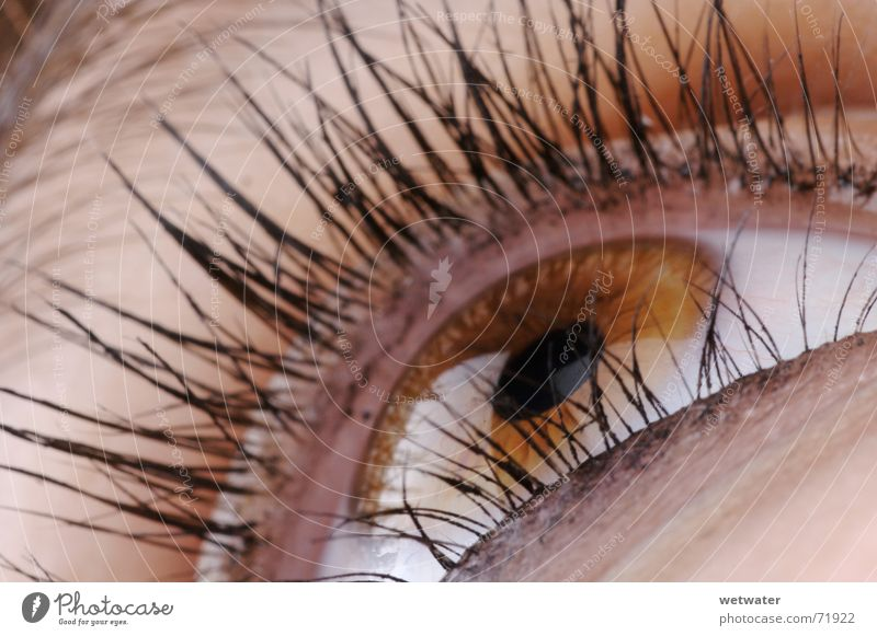 brown eye Brown Eyelash Iris Make-up Apply make-up Macro (Extreme close-up) Near Organ Woman Eyes Reflection Hair and hairstyles catch one's eye Style Looking