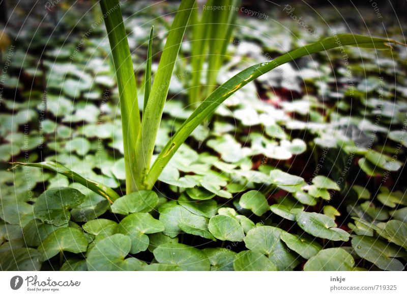 always fresh Nature Spring Plant Flower Grass Leaf Foliage plant Lily plants Ground cover plant Garden Park Growth Fresh Juicy Green Environment Colour photo
