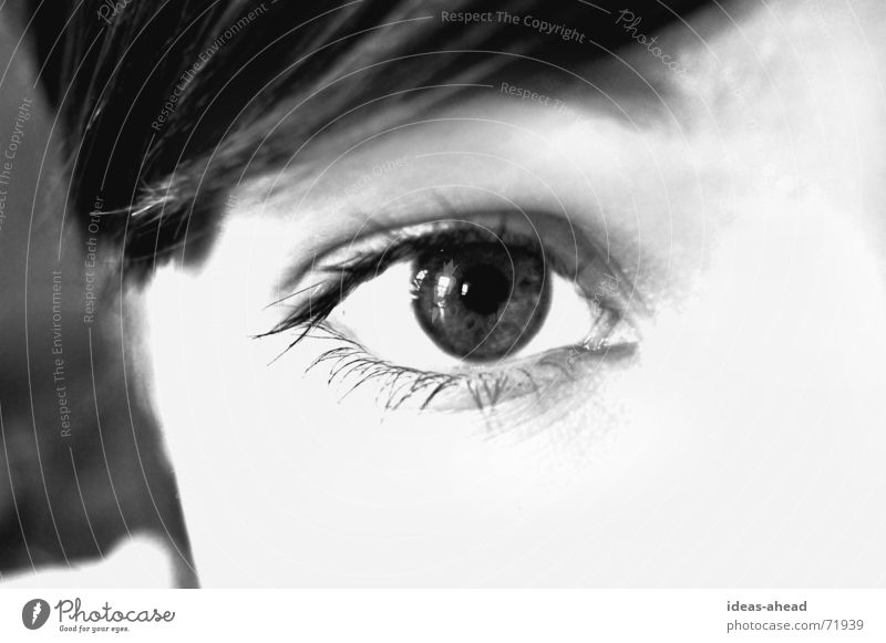 Take a look °° BW Eyelash Pupil Desire Black White Gray scale value Eye-catcher Woman Young woman Require Watchfulness Eyes Looking Face eye Perspective Lady