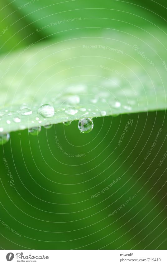 A steady drop... Environment Nature Plant Water Drops of water Spring Rain Bushes Leaf Foliage plant Garden Wet Natural Round Beautiful Green Caution Serene