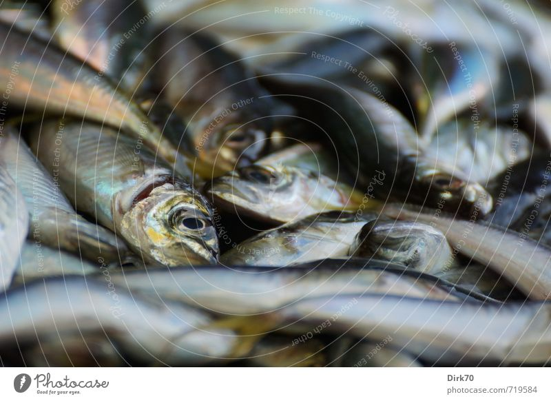 Blue White Animal Black Death Brown Food Lie Glittering Wild animal Fresh Nutrition Fish Fish Animal face Turquoise