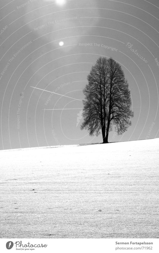 Sky Blue White Tree Sun Loneliness Winter Clouds Snow Horizon Earth Field Flying Airplane Aviation Seasons