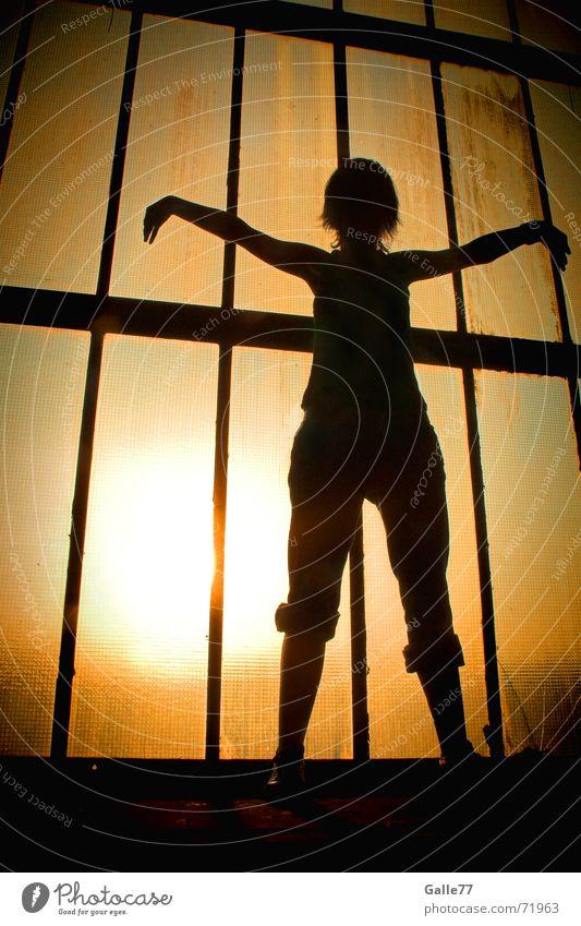 Free like a bird Back-light Summer Light Physics Yoga Meditation Relaxation Sun Flying Shadow Warmth