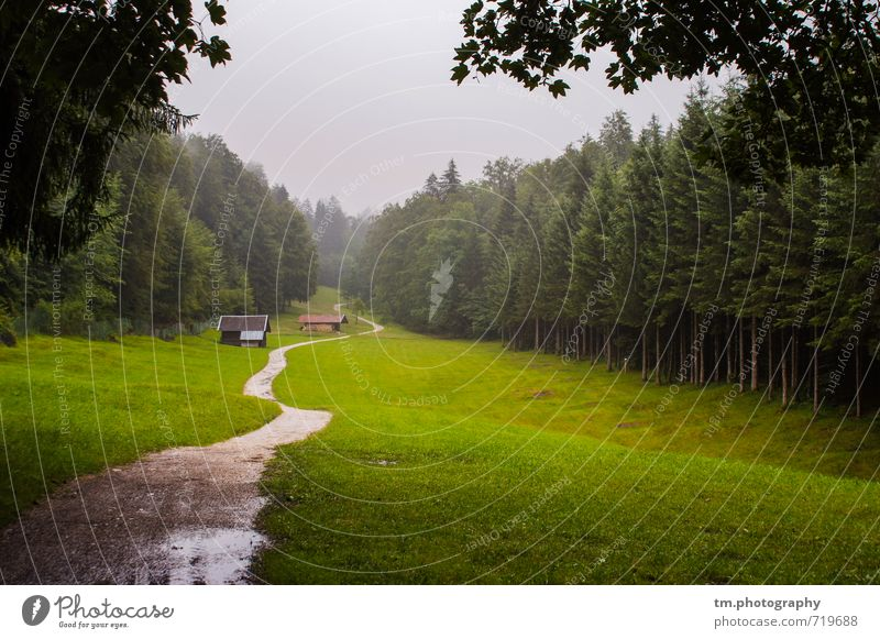 Trister Path Nature Landscape Autumn Bad weather Fog Meadow Forest Alps Mountain Lanes & trails Vacation & Travel Hiking Cold Natural Gloomy Green Brave