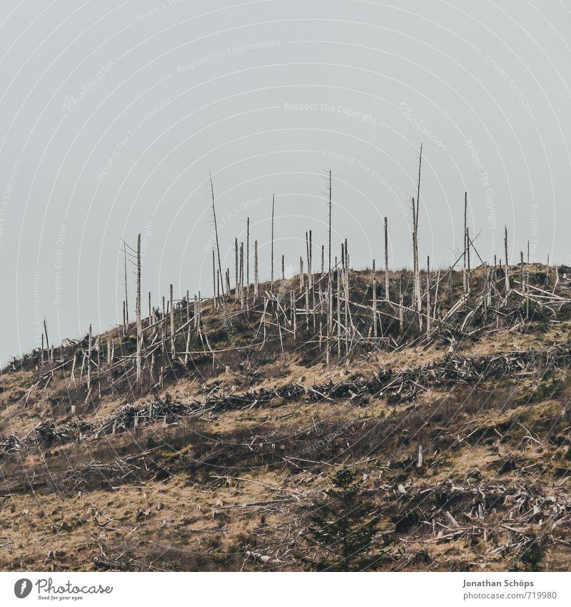 Nature Tree Landscape Forest Environment Wood Death Gloomy Dangerous Hill Grief Pain Destruction Bleak Climate change Scotland