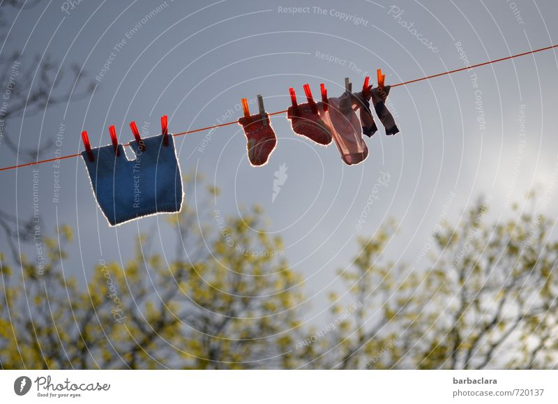 Dryness | on washing day Nature Air Sky Clouds Spring Weather Tree Bushes Blossom Garden Park Stockings baby clothes Laundry Clothes peg Clothesline Hang Fresh