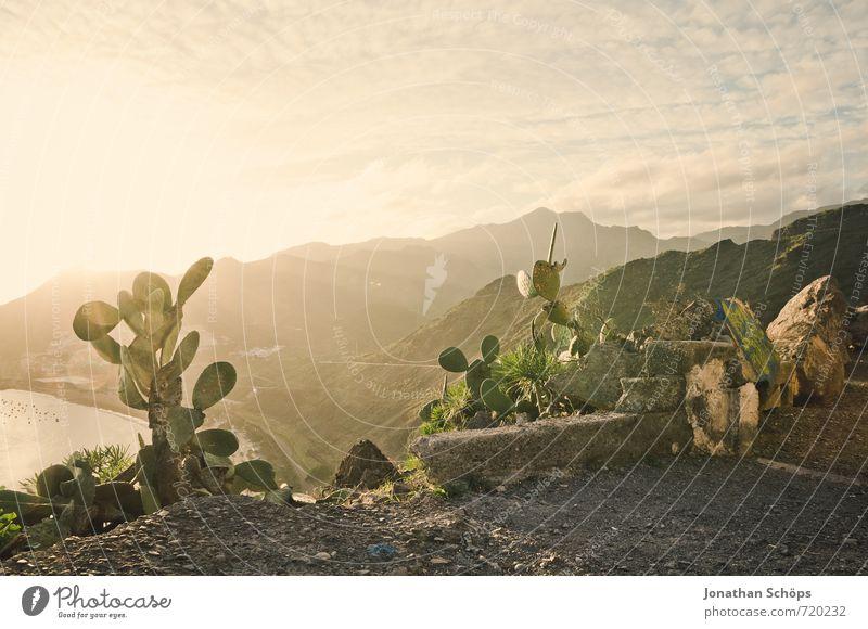 *** 750 *** SUMMER, SUN, CACTUS Environment Nature Landscape Sky Beautiful weather Rock Mountain Coast Bay Ocean Island Desert Esthetic Cactus Plant