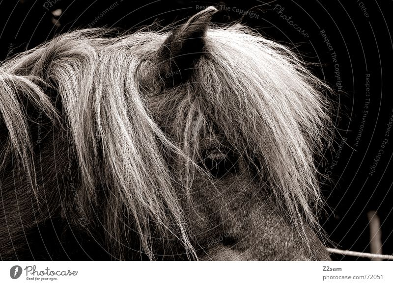 horse/profile Horse Mane Pelt Stand Animal Silhouette Ear Hair and hairstyles Looking Profile dublex Black & white photo
