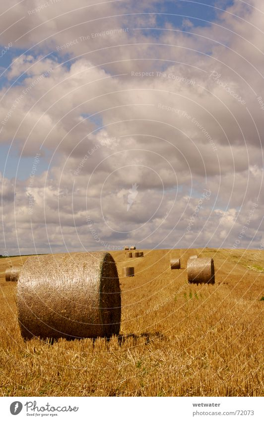 hay bales Field Clouds Clouds in the sky Sky Stubble field Summer Autumn Agriculture Yellow Harvest Grain landscape Beautiful weather sunny Gold