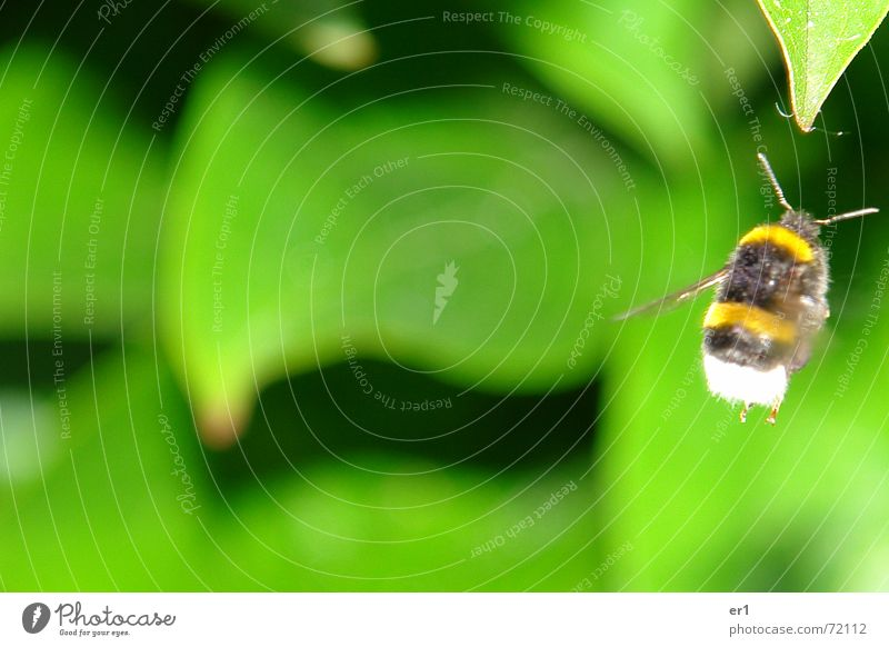 Nature Green Leaf Air Small Flying Wing Insect Feeler Bumble bee