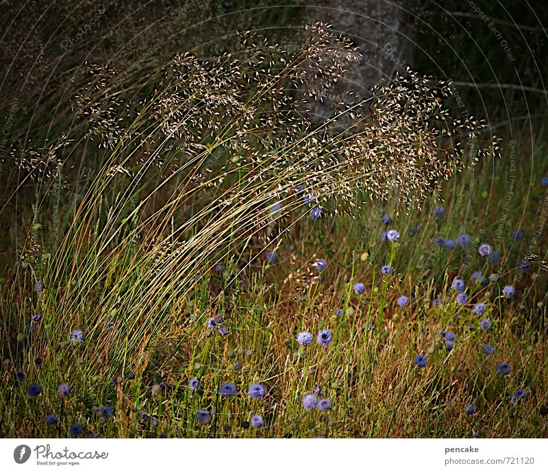 Nature Green Summer Flower Forest Autumn Meadow Grass Contentment Growth Earth Bushes Sign Elements Violet Seed