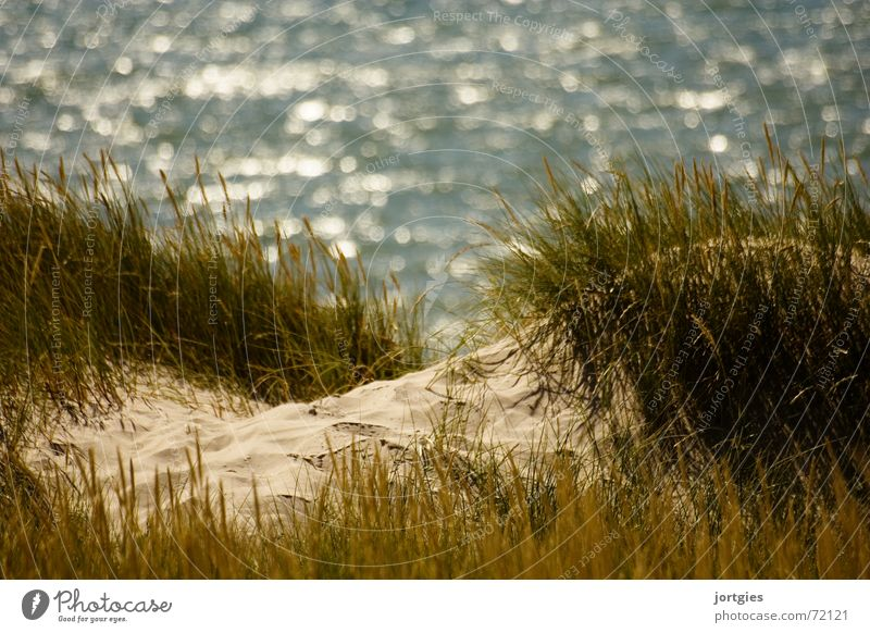 Behind the dunes, there Ocean Beach dune Dune Sand Blade of grass Common Reed Grass Coast Summer Denmark Scandinavia Joy Leisure and hobbies Vacation & Travel