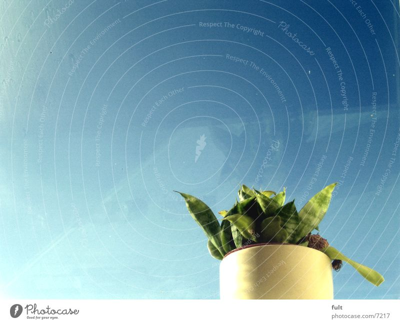 plant Plant Leaf Flowerpot Pot Green Fresh Stand Sky blue White Nature planted separated Loneliness Clarity