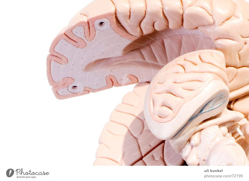 Think Circle Health care Thought Know Smart Memory Brain and nervous system Anatomy Understanding Comprehend Logic Neurology