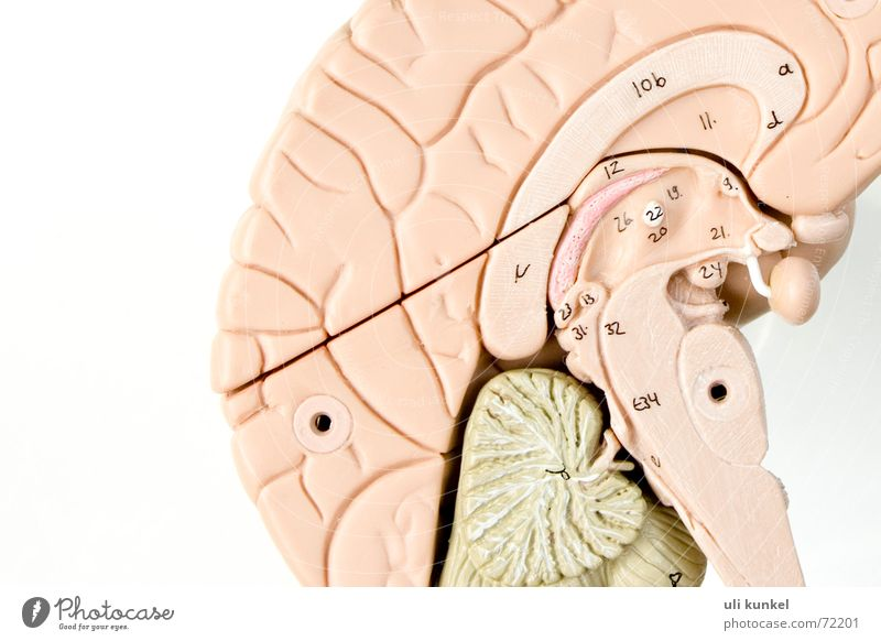 brain Brain and nervous system Anatomy Health care Thought Smart Logic Memory Understanding Neurology Circle half of the brain Think Know Comprehend