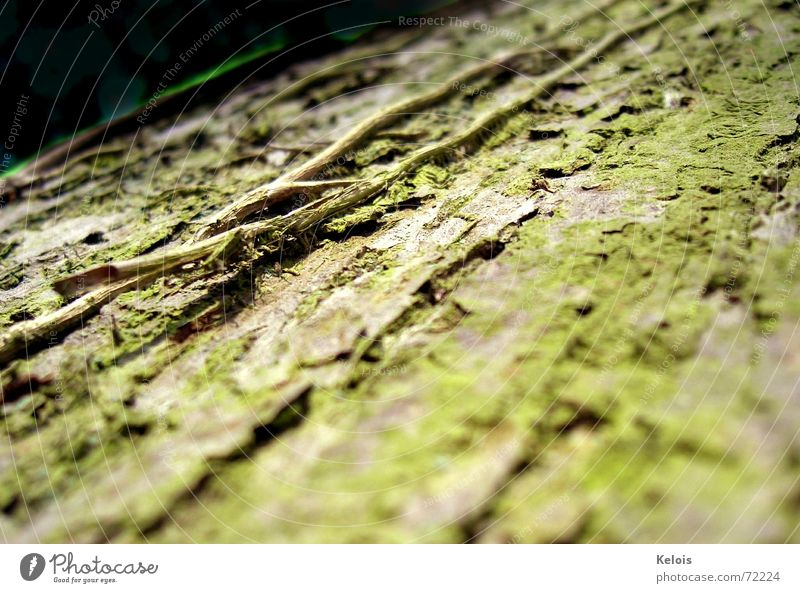 Tree without day cream Tree bark Time microcosmos insect perspective Skin Nature