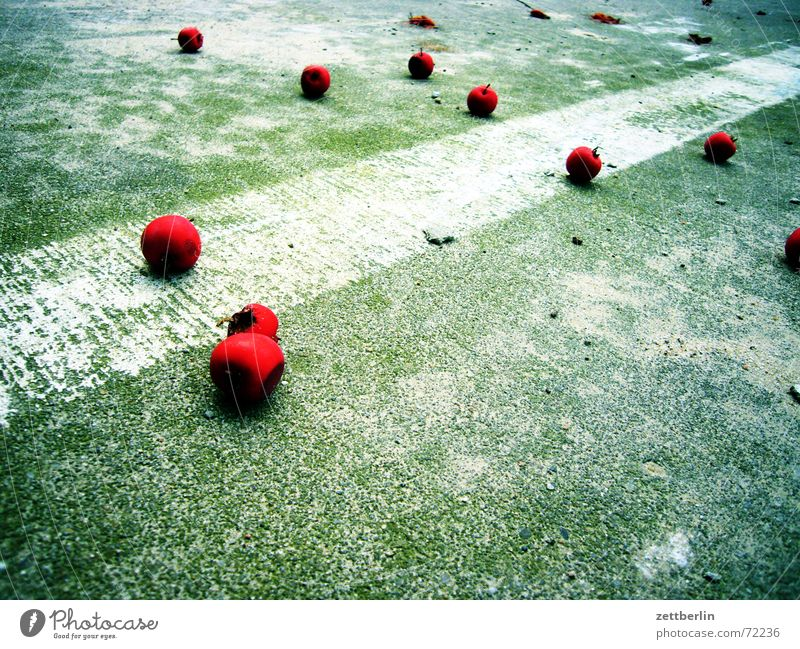 windfall Red Cherry Stone fruit Middle Parking lot Lane markings Autumn Berries Pomacious fruits concrete ceiling Ground markings Windfall