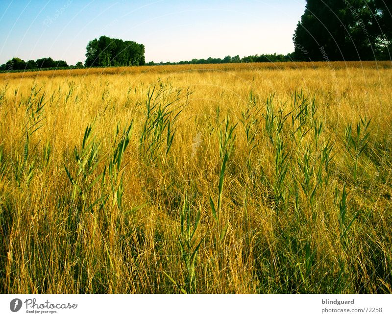 Sky Blue Green Tree Summer Grass Warmth Bright Work and employment Field Horizon Flying Trip Crazy Growth Europe