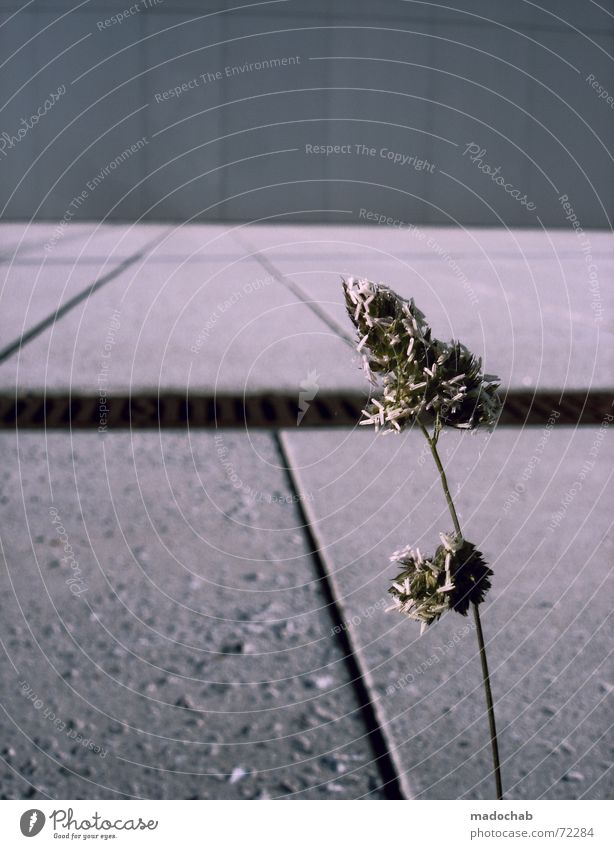 GROW! | plant dreary lonely city alone single power hope Gray Concrete Loneliness Plant Flower Graphic Growth Green thumb Dark Futurism Converse Fight Survive