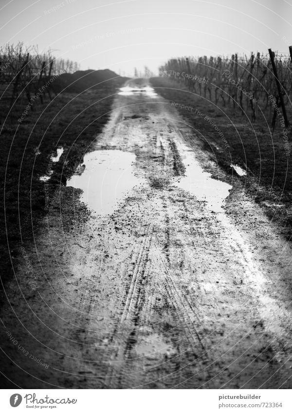 bonjour tristesse Wine growing Landscape Earth Water Autumn Winter Bad weather Rain Field Vineyard Deserted Lanes & trails Exceptional Dark Gloomy Moody