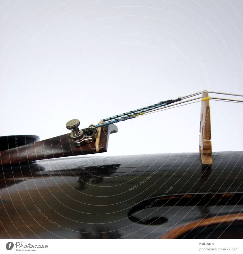 Beautiful Freedom Emotions Warmth Music Together Desire Physics Footbridge Hollow Musician Tone Musical instrument Violin Affection Chin