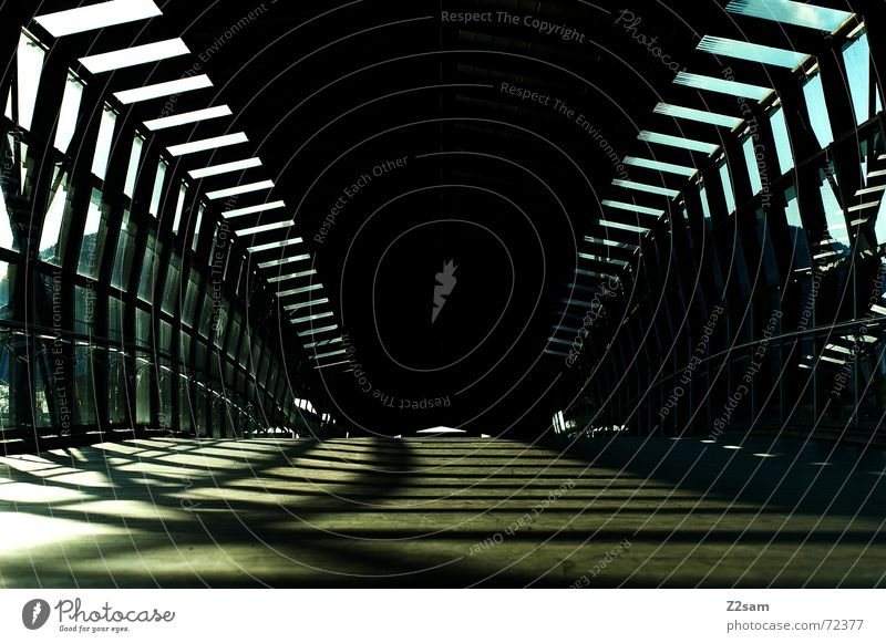 always straightforward II Tunnel Tunnel vision Light Sunbeam Wood Going Physics Pattern Bridge Woodway Warmth lines Line