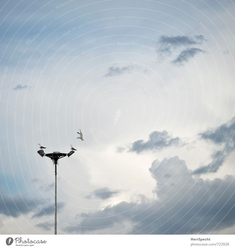 Sky Clouds Animal Flying Bird Sit Wild animal Wait Observe Wing Street lighting Attachment Seagull Seating Argument Narrow