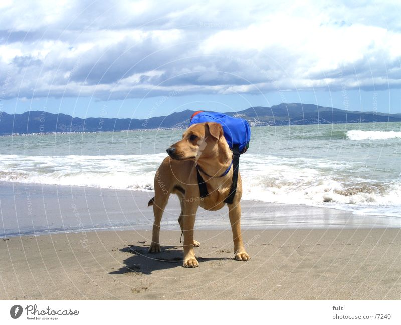 muffin alone on holiday Dog Beach Ocean Vacation & Travel Waves Spain Backpack Crossbreed Animal Horizon Clouds Stand Sky Mountain Sand Mediterranean sea Water