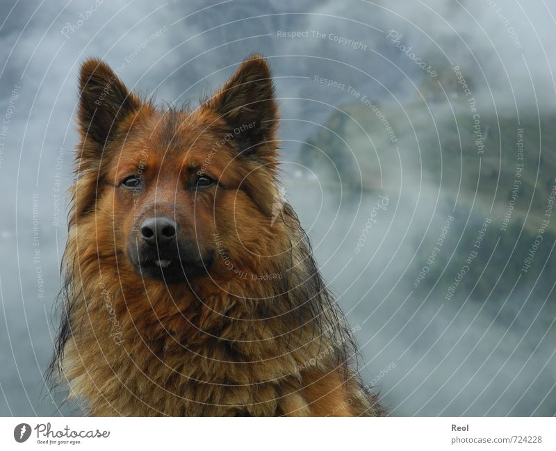Dog Nature Green White Loneliness Clouds Animal Black Cold Mountain Brown Rain Fog Wild Climate Hiking