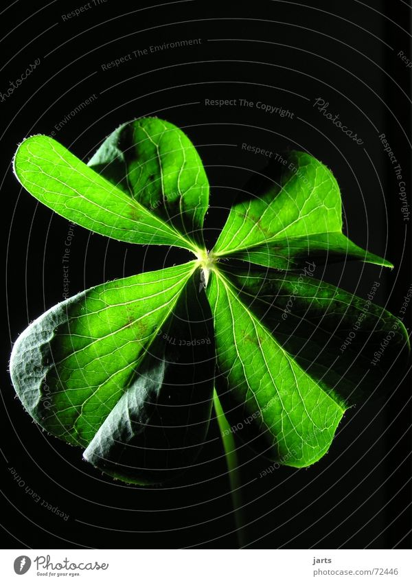 Green Religion and faith Happy Contentment Hope Desire Longing Clover Congratulations Four-leafed clover