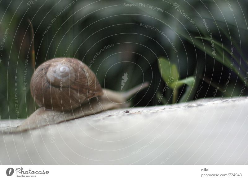 Nature Green Plant Animal Environment Meadow Movement Spring Gray Small Garden Power Beautiful weather Discover Mobility Snail