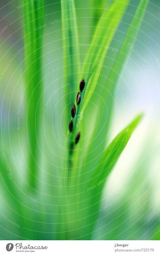 Nature Blue Green Plant Leaf Spring Grass Brown Soft Seed Foliage plant Wild plant