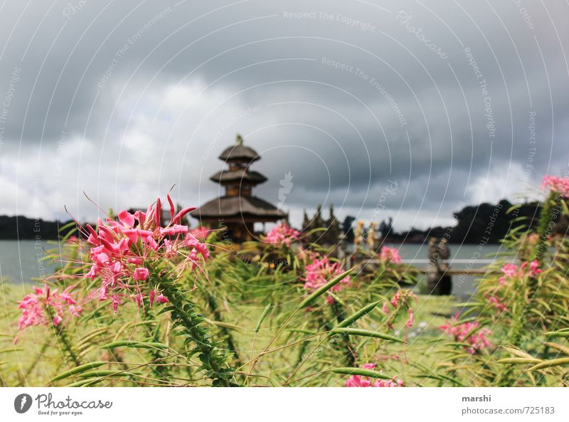 lovely Bali Leisure and hobbies Art Nature Plant Summer Climate Emotions Travel photography Asia Temple Clouds Lake water temple Flower Itinerary Lake Bratan
